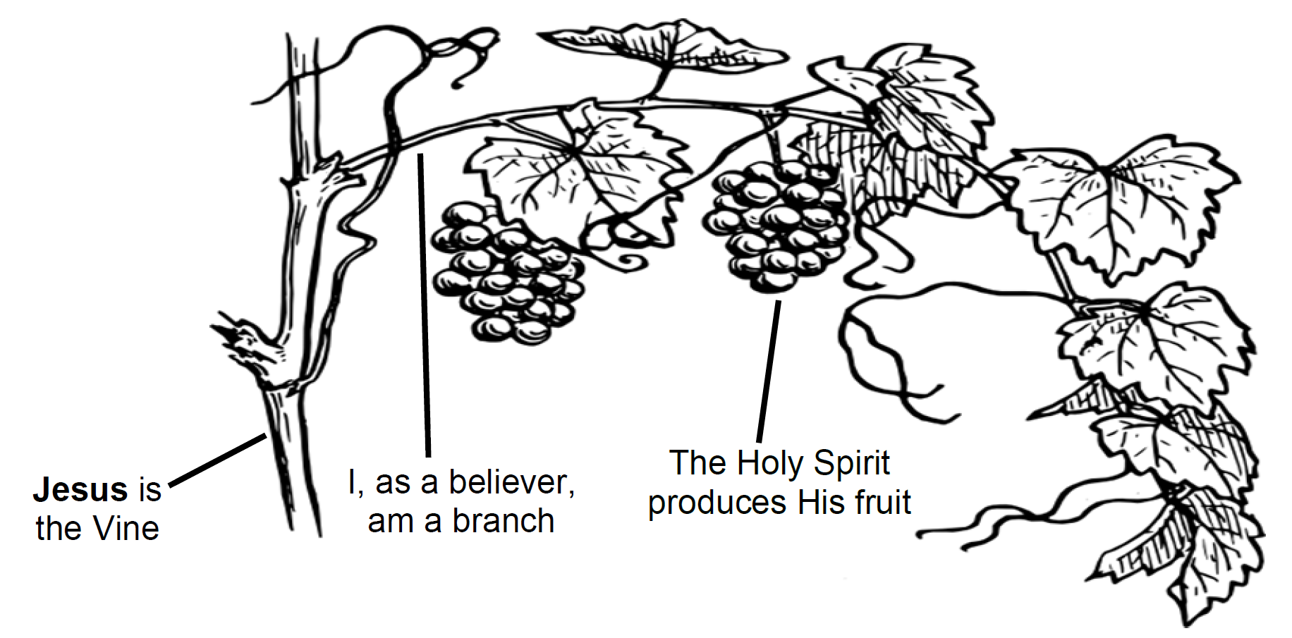 The Vine Branches and Holy Spirit